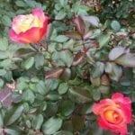 A walk in the gardens13