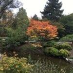 A walk in the gardens4