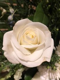 thumb_757-Rose-1
