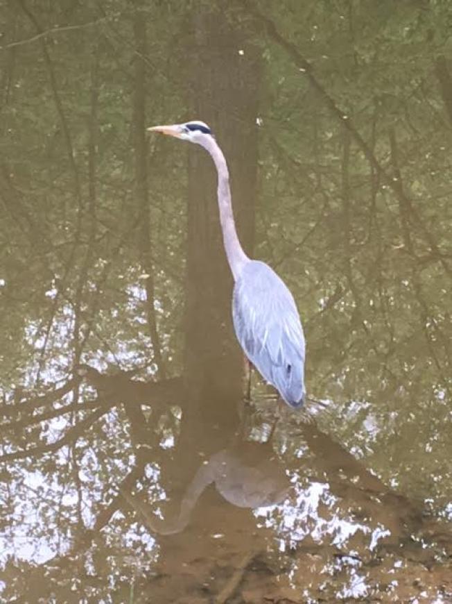 big_688-Bird-on-Canal