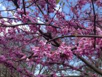 thumb_264-Spring-2014