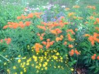 thumb_306-Chitras-Butterfly-Flowers