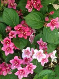 thumb_470-Purcellville-Flowers