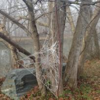 thumb_515-Frozen-Spider-Web-on-the-canal