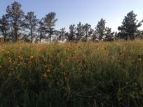 thumb_609-Wild-Flowers-Field-on-the-High-Horses-Land